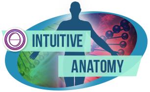 лого курс Интуитивна анатомия