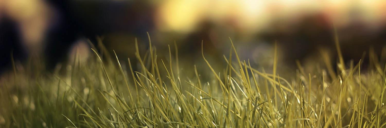 банер пролет тревички